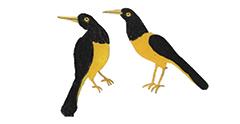 VeoVeo-NoeLeón-Pájaros[OK]